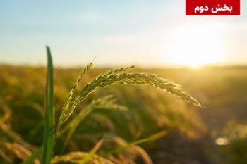 جنبه های مقرراتی و نظارتی فناوری نانو در بخش کشاورزی/خوراک/غذا در کشورهای عضو و غیرعضو اتحادیه اروپا – بخش دوم