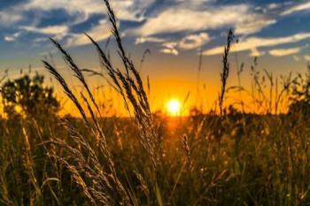 اثرات استفاده از نانوموادمهندسی شده در کشاورزی و زراعت چیست؟
