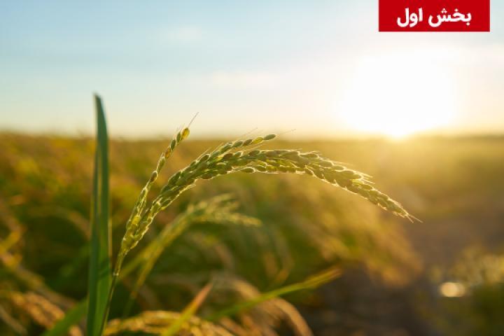 جنبه های مقرراتی و نظارتی فناوری نانو در بخش کشاورزی/خوراک/غذا در کشورهای عضو و غیرعضو اتحادیه اروپا – بخش اول